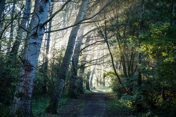 Sunrise thorugh trees