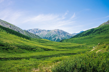 Giant mountains with snow above green valley with meadow and forest in sunny day. Rich vegetation of highlands in sunlight. Amazing mountain landscape of majestic nature.