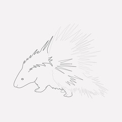 Porcupine icon line element. Vector illustration of porcupine icon line isolated on clean background for your web mobile app logo design.