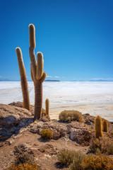 Big cactus in Incahuasi island, Salar de Uyuni  salt flat, Potosi, Bolivia
