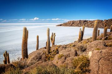 Cactuses in Incahuasi island, Salar de Uyuni  salt flat, Potosi, Bolivia