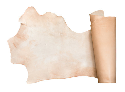 piece of vegetable-tanned cattle leather isolated