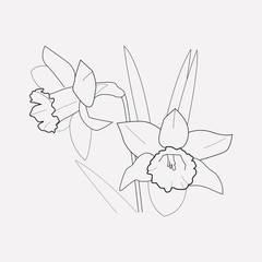 Daffodils icon line element. Vector illustration of daffodils icon line isolated on clean background for your web mobile app logo design.