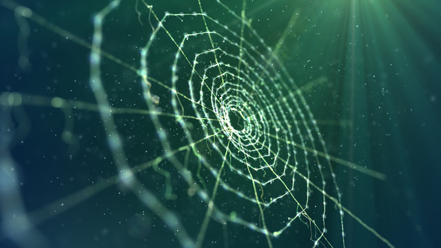 Spider Web in the Khaki Background