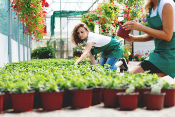 Working hard in greenhouse