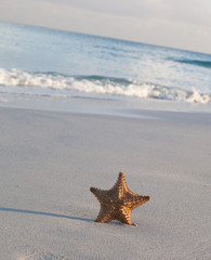 Starfish on sandy beach, close up