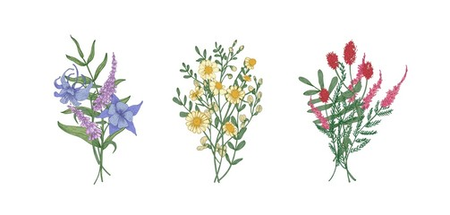 Bundle of bouquets of gorgeous meadow flowers and herbaceous plants. Set of bunches of blooming herbs isolated on white background. Romantic floral hand drawn vector illustration in realistic style.