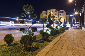 Figuredly trimmed green bushes in the night neon light along the road