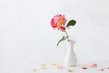 roses oin vase on white background