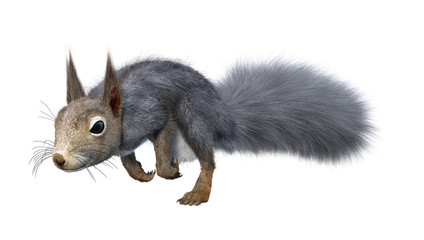 3D Rendering Eastern Grey Squirrel on White