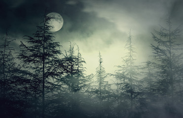 Night Forest with foggy sky and Moon, Nightmare