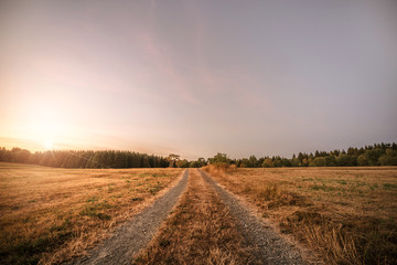 Dirt road in the sunset going to a forest