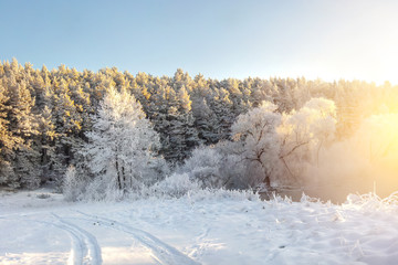 Winter nature landscape with sunlight in the morning. Frosty trees covered by hoarfrost. Amazing winter. Beautiful snowy winter scene.