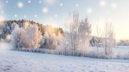 Magic Christmas nature in morning. Trees with snow illuminated by warm sunlight. Winter nature landscape with falling snowflakes. Winter fairytale. Hoarfrost on plants and trees. Winter forest.