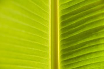 full frame shot of a green Banana leaf