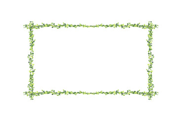 Many Green Ficus pumila leaves and blank Photo frame isolated on white background