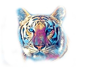 tiger art illustration color