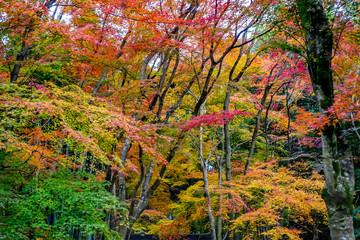 京都西京区 衣笠山地蔵院前の紅葉
