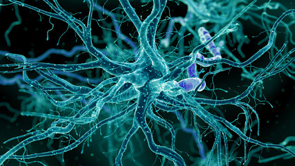 3d rendered medically accurate illustration of a human nerve cell
