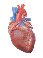 3d rendered medically accurate illustration of a heart with 3 bypasses