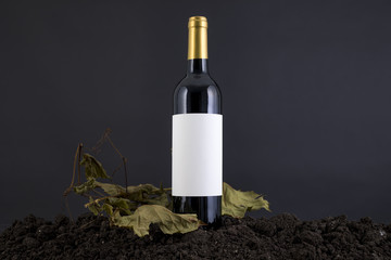 Wine Bottle with vine in a black background