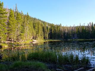 Lake of Lily Pads