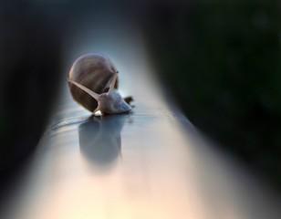 ślimak pełzający po torze