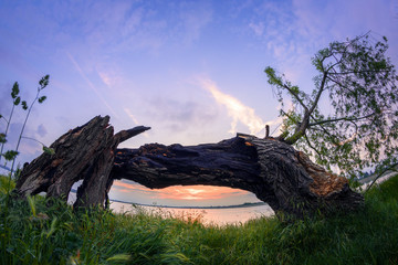 Framed sunset behind an old tree shot with fisheye lens