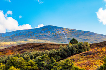 Schiehallion viewed from Tay Forest Park, Scotland