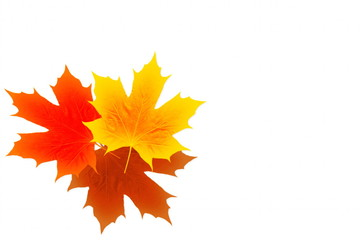 autumn fall colored leaves texture on white background for nature concept fall concept autumn concept