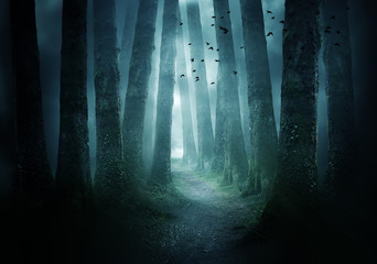 Wall Murals Road in forest Pathway Through A Dark Forest