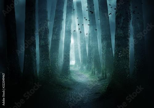 Pathway Through A Dark Forest