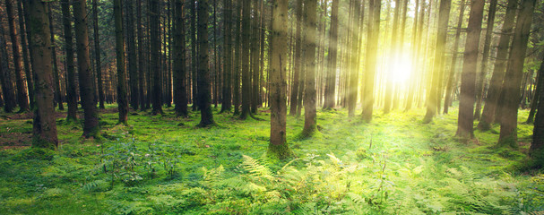 Summer forest with sun light. Nature background.