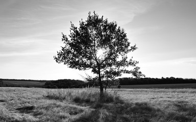 Black and white photo of landscape with shining sun through lonely tree