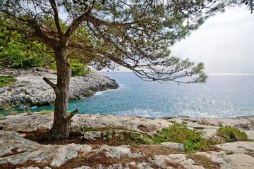 Fototapeta Puglia, Italy, August 2018, Cala Zio Cesare of San Domino island with Aleppo pine in foreground  obraz