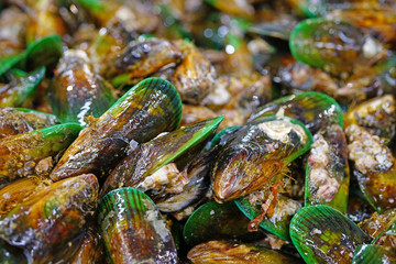 Green lipped New Zealand mussels at the fish market