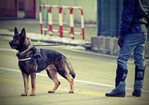 police dog and a policeman with vintage effect on the street