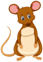 Small brown rat white background