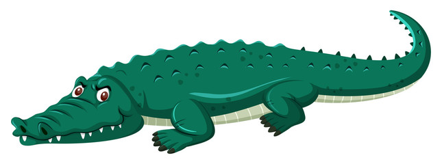 large green crocodile white background