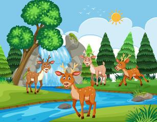 Deers in outdoor scene