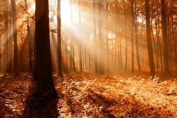 Foto op Canvas Bos in mist Autumn forest landscape