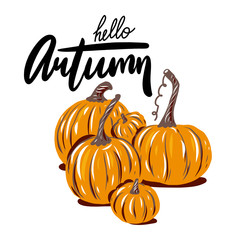 Autumn Pumpkin. Hand drawn vector illustration. Modern brush calligraphy.