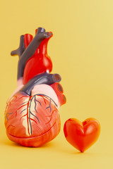Love your heart concept - Isolated model of a human heart on yellow background.