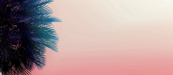 Wall Mural - Website banner with copy space in pink color and palm tree. Concept of Los Angeles and cheap travel agency, summer blog header.