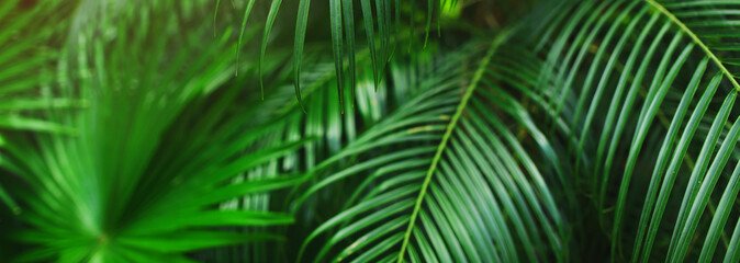 Wall Mural - Website banner of tropical palm leaves an foliage. Concept of blog heading, tropical theme, summer blog header. flora and plants.