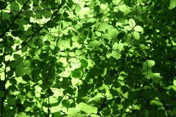 Laub leuchtend grün im Wald
