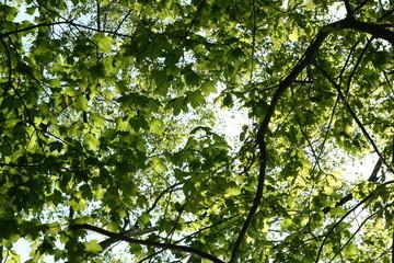 Sonne scheint durch Laub im Wald