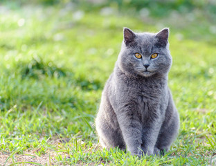 Gray cat on the nature