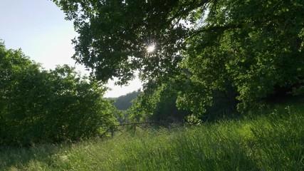 Wall Mural - Sun breaks through green tree leaves. Summer concept. Gimbal shot. 4K