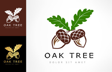 Oak tree logo. Acorn  vector.